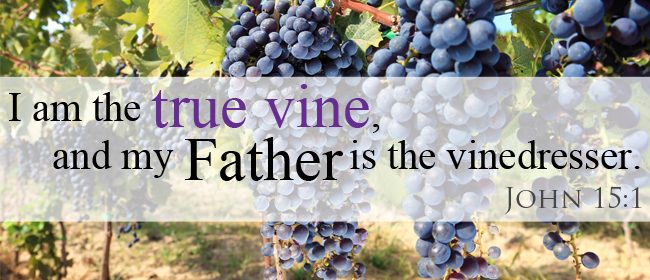 The vine dresser